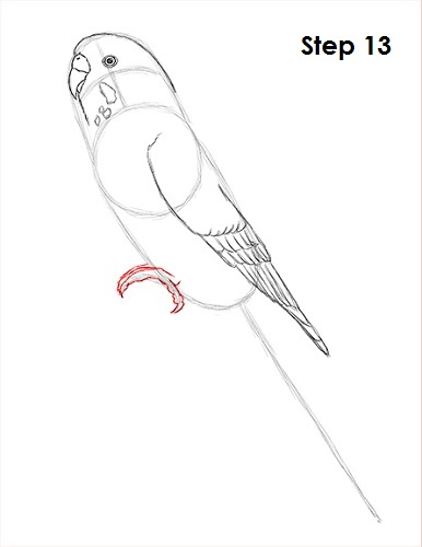 draw-budgie-parakeet-13.jpg