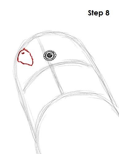 draw-budgie-parakeet-8.jpg