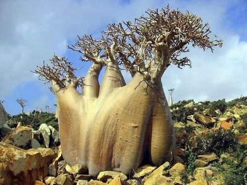 Sıradışı ağaçlar