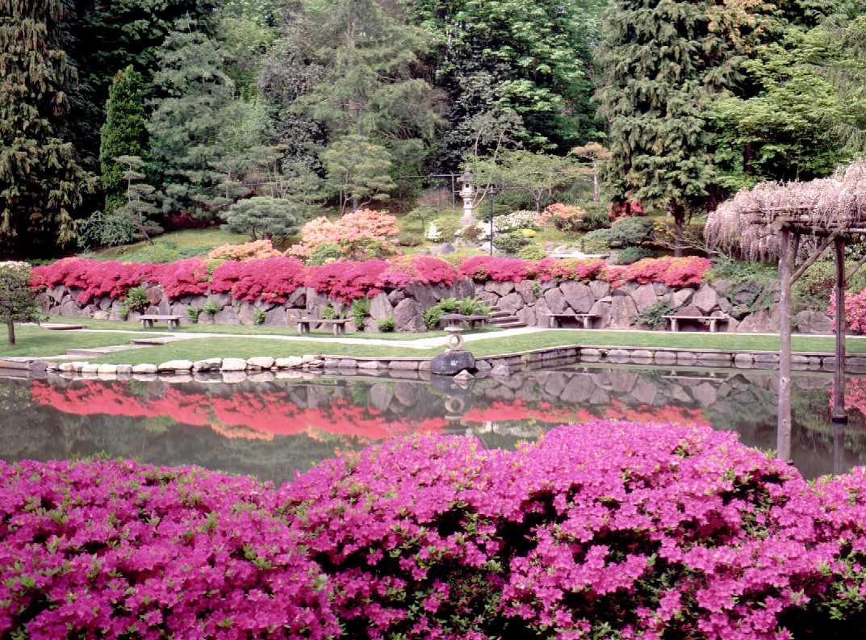 japanese-garden1.jpg