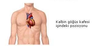 kalbinpozisyonu.jpg