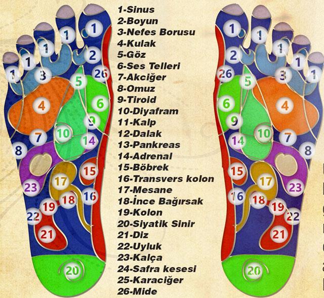 refleksoloji-ayak-masajc4b1-tablosu1.jpg